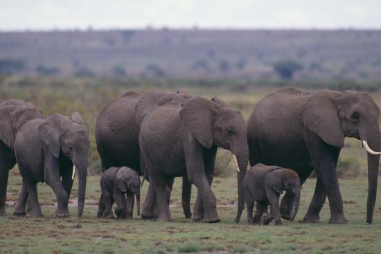 Elephants-DLILLC-Photographic Print
