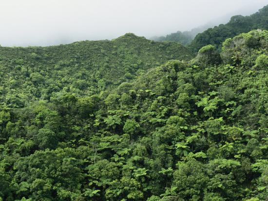 Elevated View of Forest-Covered Mountains in Morning Fog-Tim Laman-Photographic Print