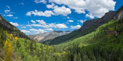 Elevated view of trees on landscape along Country Road 361, Camp Bird Road, San Juan Mountains,...--Photographic Print