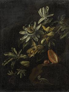 Still Life with Passionflowers by Elias Van Den Broeck
