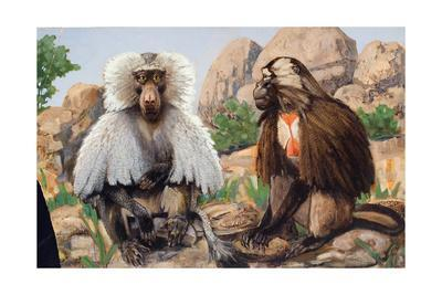 Painting of a Hamadryas and a Gelada Baboon