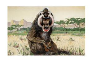 Painting of a Male Mandrill, Papio Sphinx by Elie Cheverlange