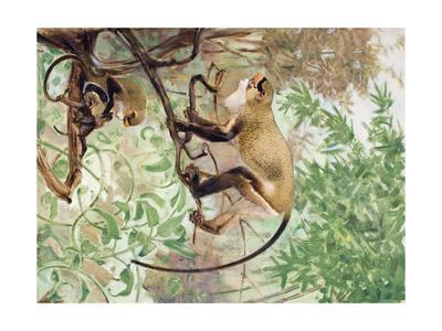 Painting of De Brazza Guenons in a Treetop Setting