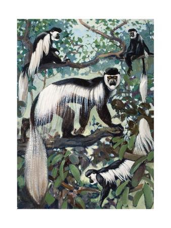 Painting of Guereza Monkeys in Treetops