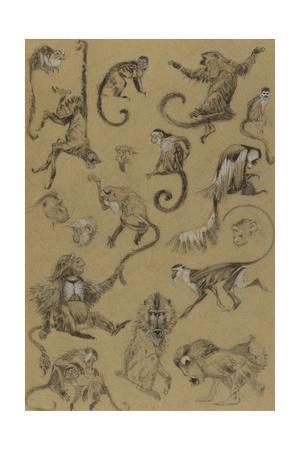 Sketches of Monkeys from the Notebook of Elie Cheverlange