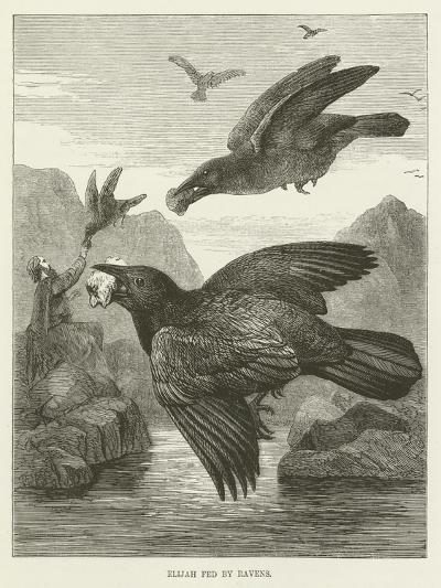 Elijah Fed by Ravens--Giclee Print