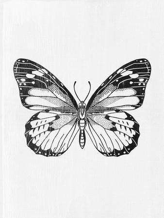 Black Butterfly II