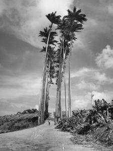 Towering Palm Trees Line Dirt Road as They Dwarf a Native Family Traveling on Foot by Eliot Elisofon