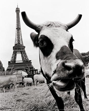 A Farmers Demonstration in Paris