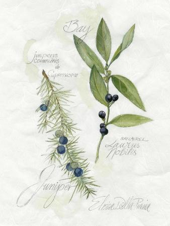 Bay Leaf & Juniper