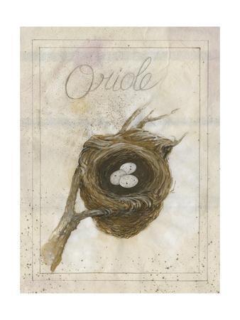 Nest - Oriole