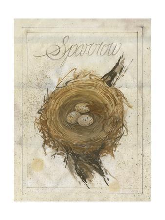 Nest - Sparrow