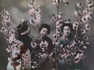 Three girls in kimonos with cherry blossoms. by Eliza R^ Scidmore