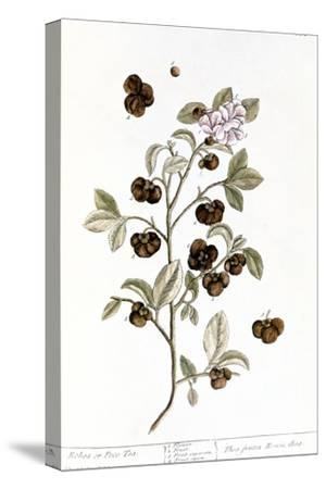 Peco Tea, 1735