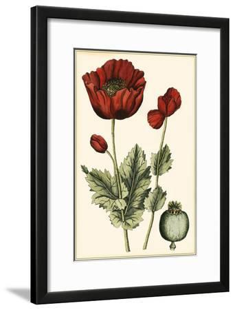 Small Poppy Blooms I