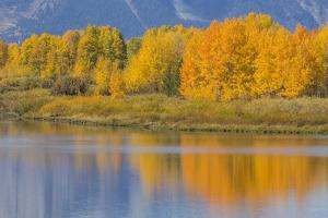 USA, Wyoming, Grand Teton NP. Autumn colored aspen trees are reflected in the Snake River by Elizabeth Boehm
