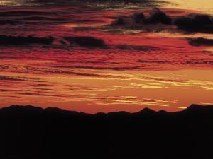 Sonoran Desert, Near Tucson, Arizona by Elizabeth DeLaney