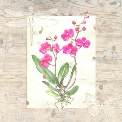 Orchid Wood Grain