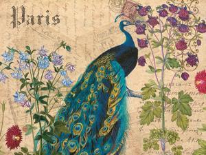 Paris Peacock Botanical 3 by Elizabeth Jordan