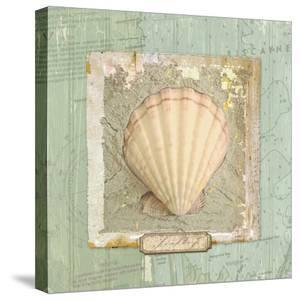 Seashore Collection II by Elizabeth Medley