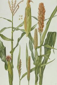 Maize and Other Crops by Elizabeth Rice