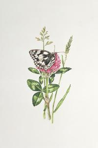 Marbled White Butterfly on Clover by Elizabeth Rice