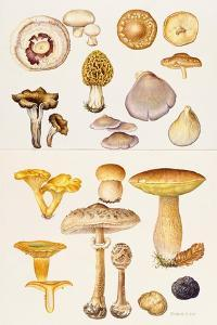 Mushrooms and Truffles by Elizabeth Rice