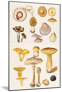 Mushrooms and Truffles by Elizabeth Rice