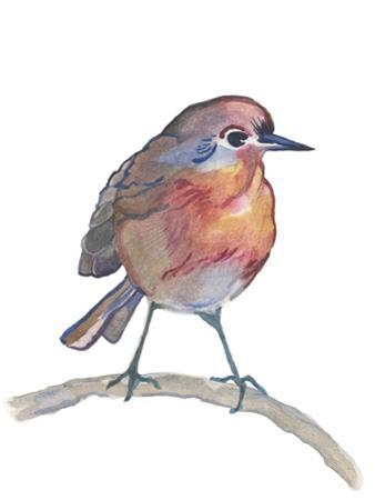 Robin by Elizabeth Rider