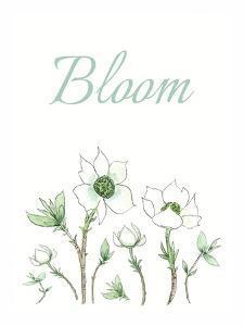 Bloom by Elizabeth Tyndall