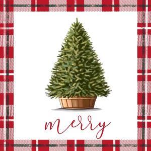 Merry by Elizabeth Tyndall