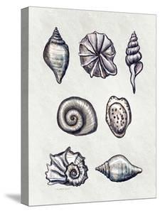 Shells I by Elizabeth Tyndall