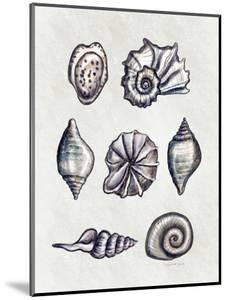 Shells II by Elizabeth Tyndall