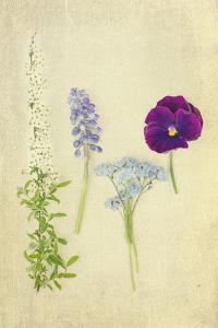 Blue and Purple Flowers by Elizabeth Urqhurt