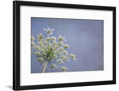 One Queen Anne's Lace Blossom