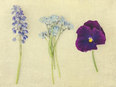 Puple and Blue Flowers