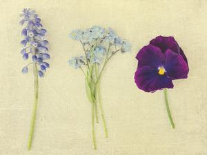 Puple and Blue Flowers by Elizabeth Urqhurt