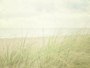Beach Grass II by Elizabeth Urquhart