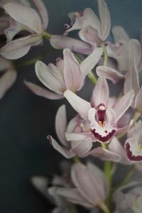Dark Orchid II by Elizabeth Urquhart