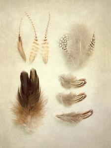 Feathers II by Elizabeth Urquhart