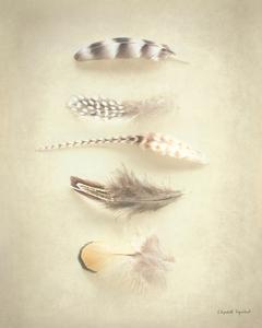 Feathers III by Elizabeth Urquhart