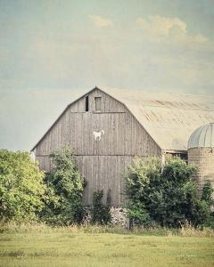 Late Summer Barn II Crop by Elizabeth Urquhart