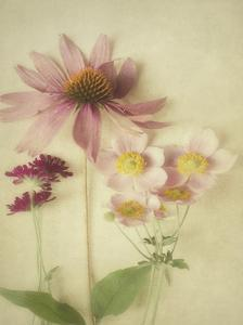 Late Summer Blooms 1 by Elizabeth Urquhart