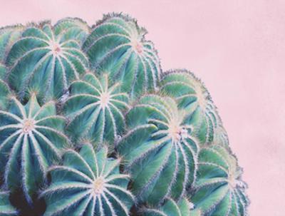 Pink Crush II by Elizabeth Urquhart