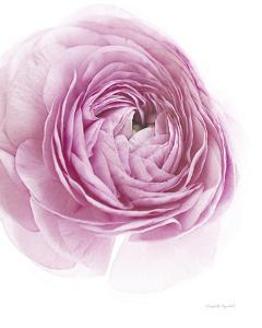 Pink Lady III by Elizabeth Urquhart