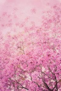 Pink On Pink I by Elizabeth Urquhart