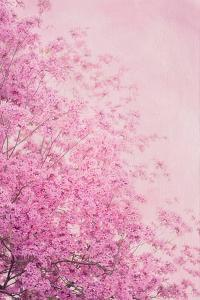Pink On Pink II by Elizabeth Urquhart