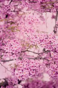 Pink On Pink IV by Elizabeth Urquhart