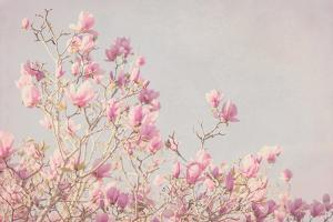 Pink Tree Tops I by Elizabeth Urquhart