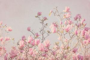 Pink Tree Tops II by Elizabeth Urquhart